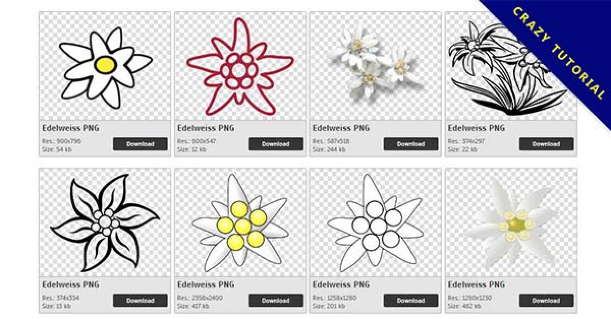 36 Edelweiss PNG images to download