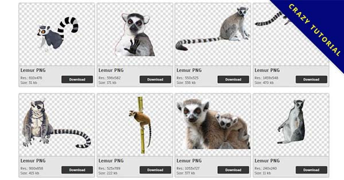 35 Lemur PNG image collection for free download