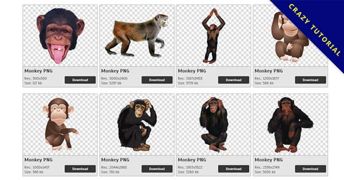 29 Monkey PNG image collection for free download