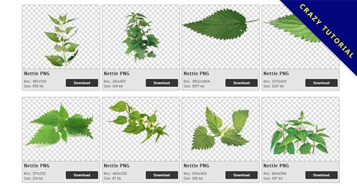 28 Nettle PNG images collected for free download