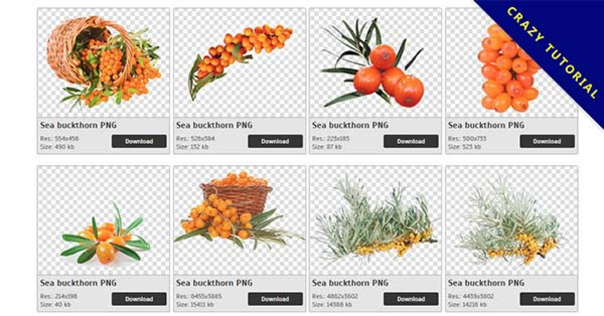 40 Sea buckthorn PNG images are free to download