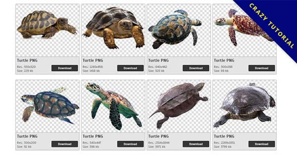 69 Turtle PNG images for free download