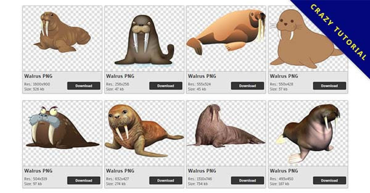 9 Walrus PNG image collection for free download