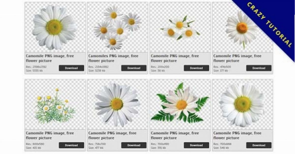 17 Camomile PNG images for free download