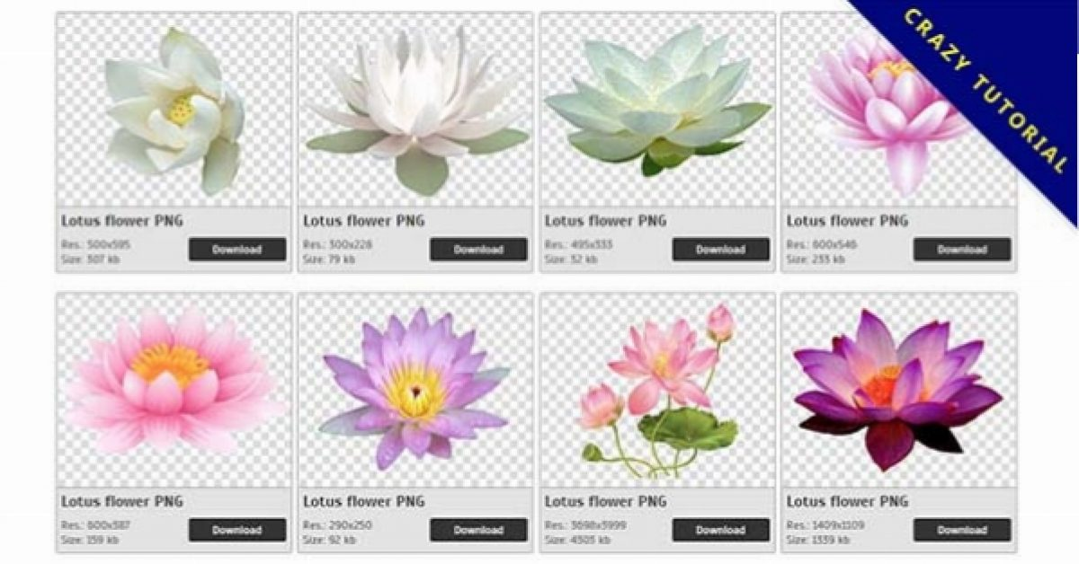 75 Lotus PNG image collections are available for free download
