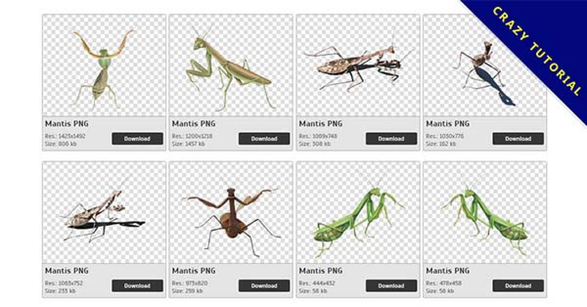 71 Mantis PNG images for free download