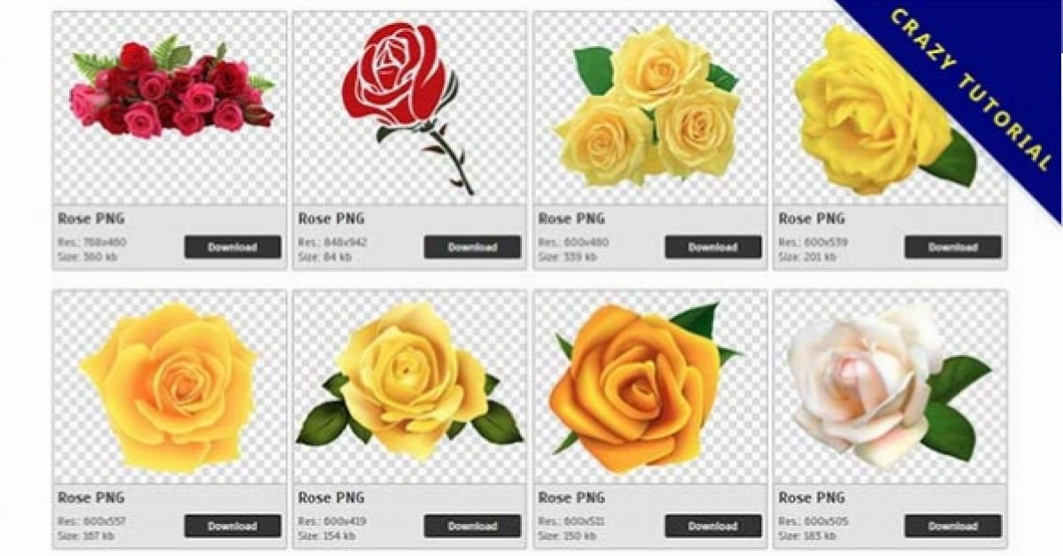 359 Rose PNG images are free to download