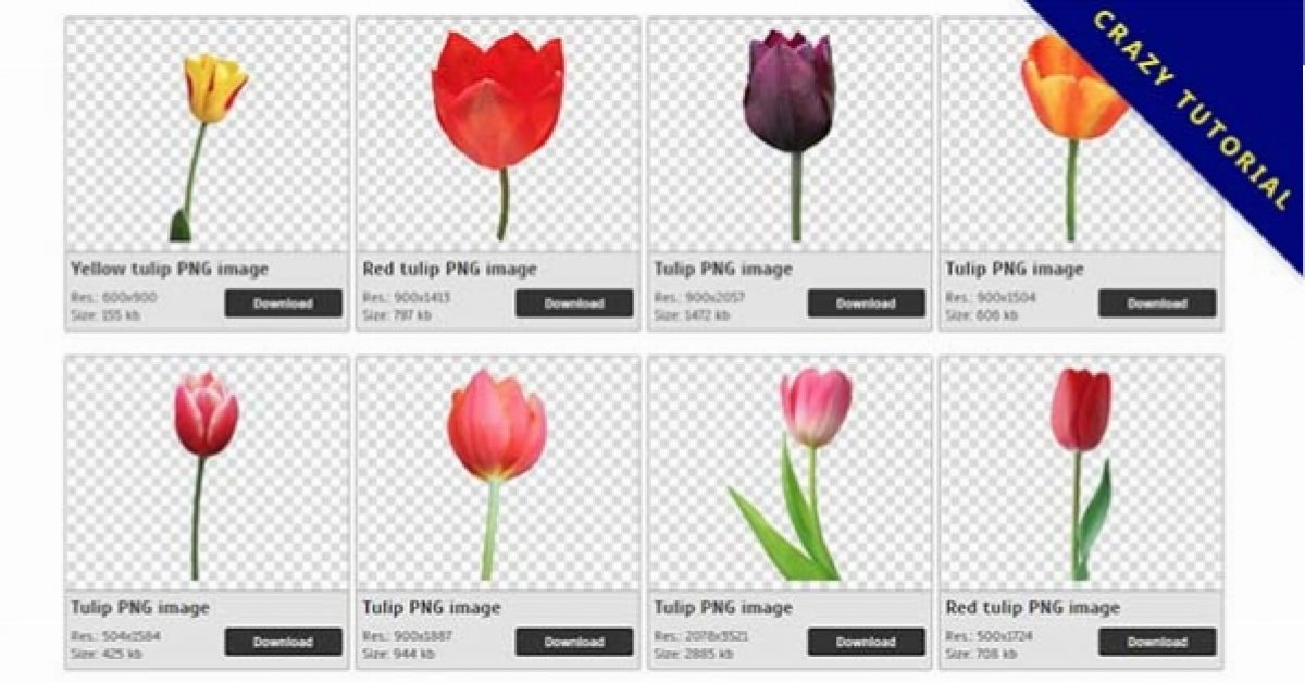 49 Tulip PNG images are free to download